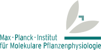 Max Planck Institut of Molecular Plant Physiology
